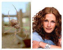 Charlotte's Web - Photo Gallery