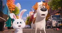 The Secret Life of Pets - Photo Gallery